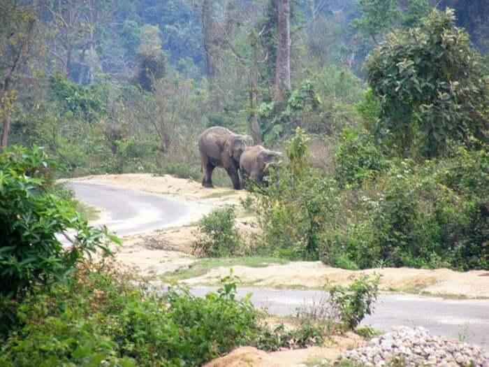 File picture of a corridor in Kaziranga -Karbi Anglong landscape.Photo:WTI