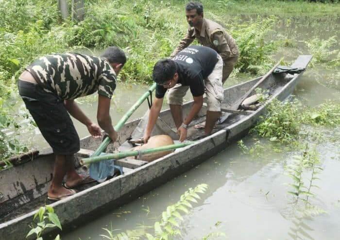 CWRC rescuers bring in a wild hog deer