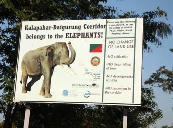 elephant corridor