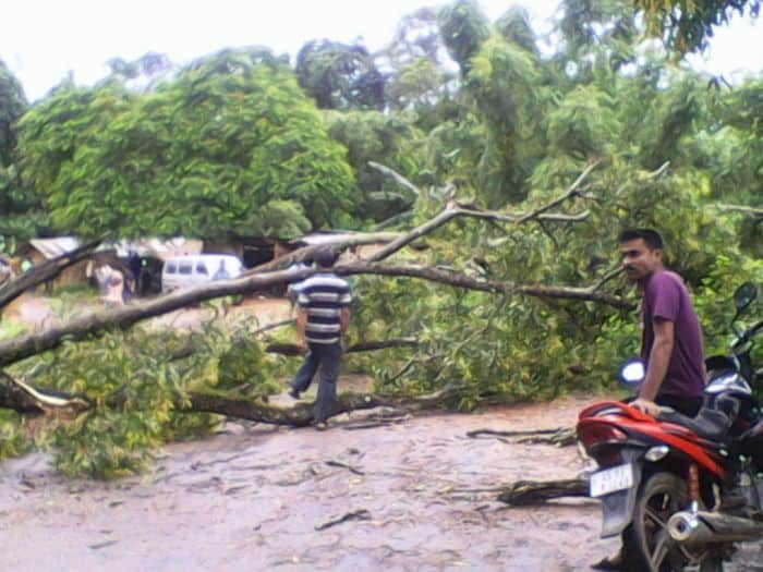 villagers try to pass a fallen tree