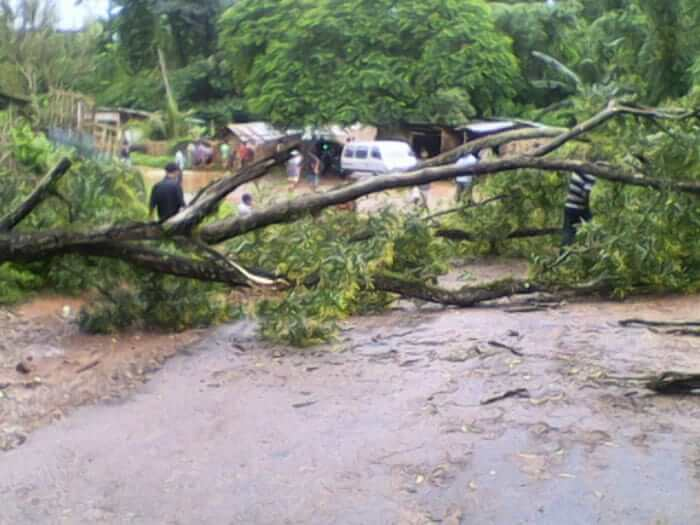 Trees Down In Hamren Town After Flash Flood