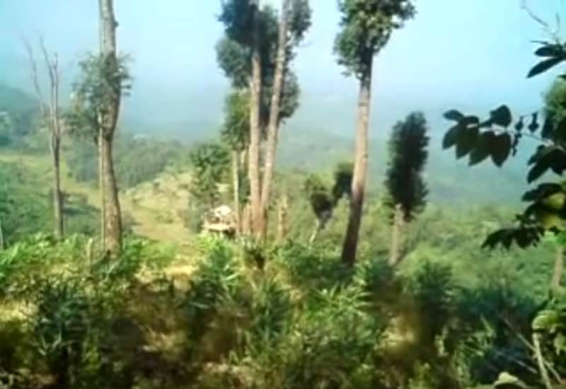 karbi anglong forest