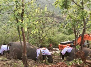 dead elephants. Photo c/o Nava Thakuria.