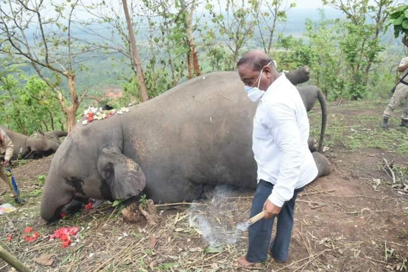 Man with elephant in Asom. Photo c/o Nava Thakuria.
