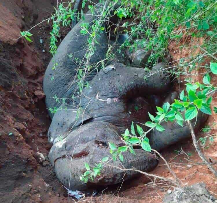 great elephant death in assam. Photo c/o Nava Thakuria.