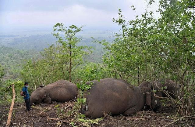 elephant tragedy on hillside. Photo c/o Nava Thakuria.