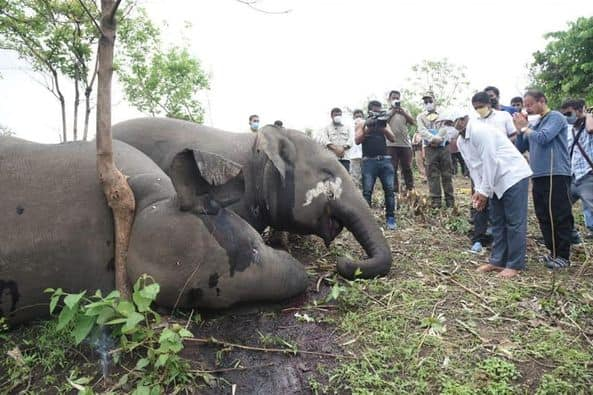 people investigate dead elephants. Photo c/o Nava Thakuria.
