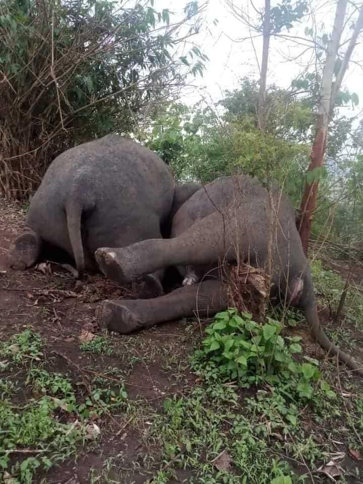 two dead elephants. Photo c/o Nava Thakuria.